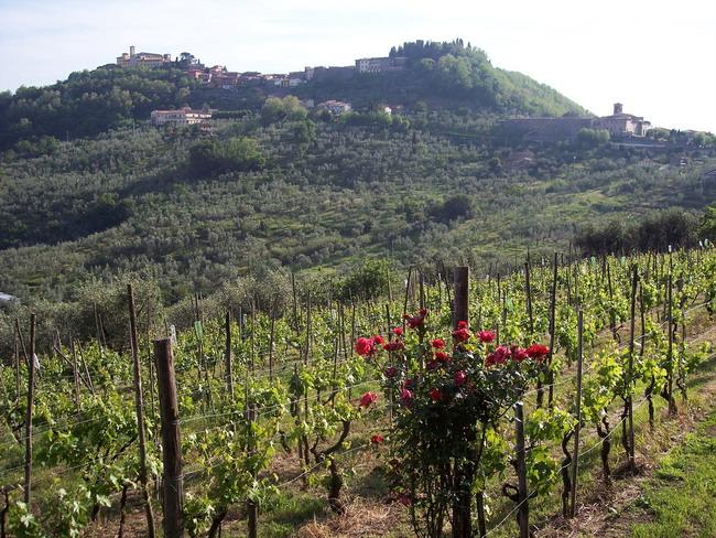Итальянский минеральный курорт Монтекатини Термо. Фото предоставлено организаторами конференции