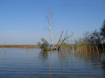 Участок Нарвского водохранилища. Фото: С сайта livejournal.com