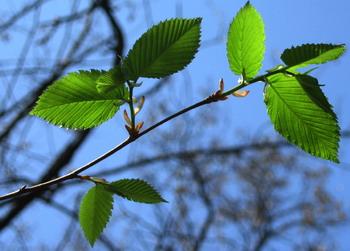 Когда растения подвергаются атаке болезнетворных бактерий, от листьев к корням растения идет сигнал. Фото: Ирина РУДСКАЯ/Великая Эпоха