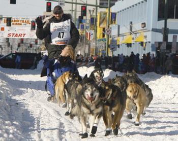 Ведущий упряжки приветствует зрителей во время торжественного открытия гонок. Фото: Al Grillo