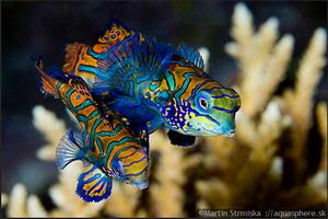 Подводный мир во всей своей красе. Фото: Мартин Стримиски/Aquasphere.sk
