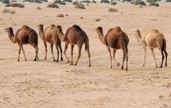 Фирмы Германии собираются вместе построить гигантскую солнечную  электростанцию в Сахаре. Фото: FETHI BELAID/AFP/Getty Images