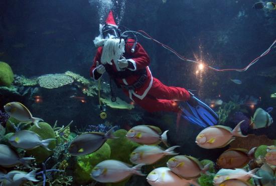 Водолаз, одетый в костюм Санта Клауса, выступает в аквариуме для Рождественского фестиваля в Бангкоке 18 декабря 2008. Фото: PORNCHAI KITTIWONGSAKUL/AFP/Getty Images
