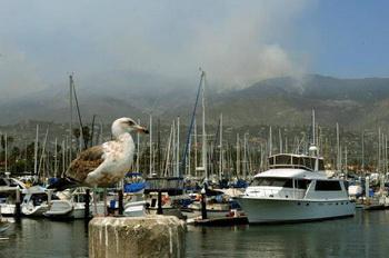 Горящие холмы Санта-Барбары. Фото: MARK RALSTON/AFP/Getty Images