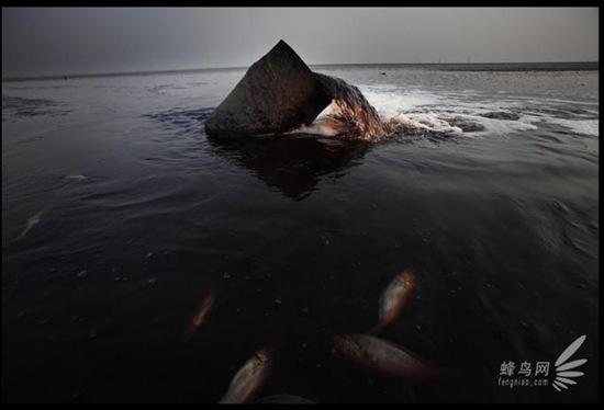 Во многих местах вдоль берега Жёлтого моря на отмелях расположены сточные трубы предприятий. 28 апреля 2008 год. Фото: Лу Гуан