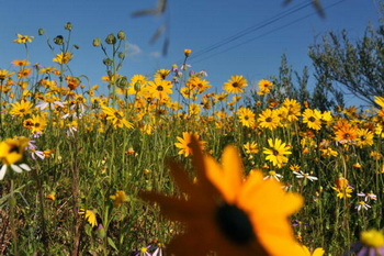 Здоровье в тонких ароматах. Аромотерапия - это прекрасная возможность воспользоваться благосклонностью природы для восстановления здоровья. Фото: RODGER BOSCH/AFP/Getty Images