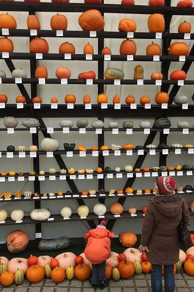 Фестиваль тыквы в Брэндоне, окраине Берлина. Фото: Sean Gallup/Getty Images
