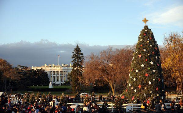 Самые высокие и красивые елки в мире, в Вашингтоне США. Фото: TIM SLOAN/AFP/Getty Images