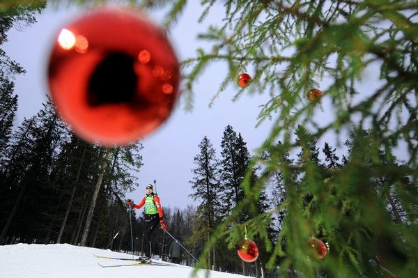 Самые высокие и красивые елки в мире, в Швеции, Остерсанд . Фото: OLIVIER MORIN/AFP/Getty Images