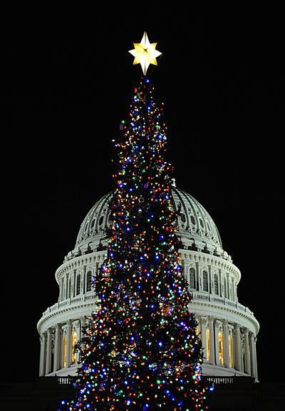 Самые высокие и красивые елки в мире, в США, Вашингтон. Фото: KAREN BLEIER/AFP/Getty Images