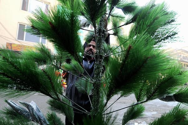 Самые высокие и красивые елки в мире. в Кабуле, Афганистан. Фото: SHAH MARAI/AFP/Getty Images