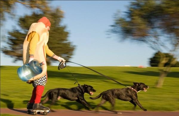 Уличный актер едет вдоль Fisherman's Wharf на роликовых коньках с помощью своих собак в парке округа Марина. (Catherine Karnow)