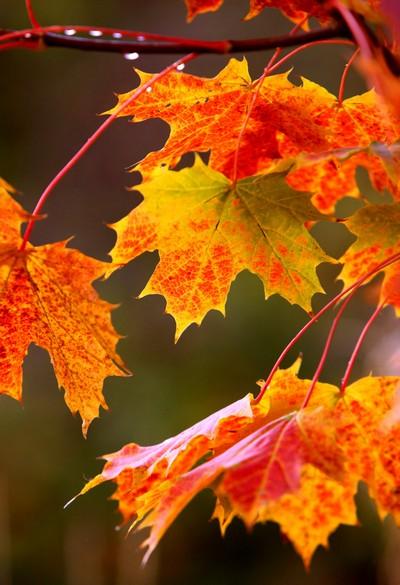 Осень забавные картинки