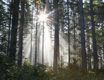 Сибирские леса нелегально вырубают и вывозят за рубеж. Фото: Ryan McVay / Getty Images