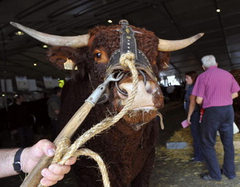 Россия запретила ввоз мяса из четырех стран. Фото: THIERRY ZOCCOLAN/AFP/Getty Images News