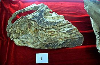 Ископаемые останки из Ляонина.
