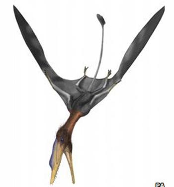У этой рептилии были черты, как примитивного птерозавра, так и представителя более позднего вида.