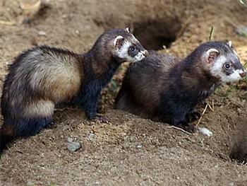 Фото с animalpicturesarchive.com