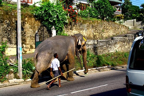 Шри-Ланка. Фото: Сима Петрова/Великая Эпоха (The Epoch Times)