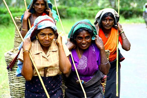 Шри-Ланка. Сборщицы чая идет домой после работы. Фото: Сима Петрова/Великая Эпоха (The Epoch Times)
