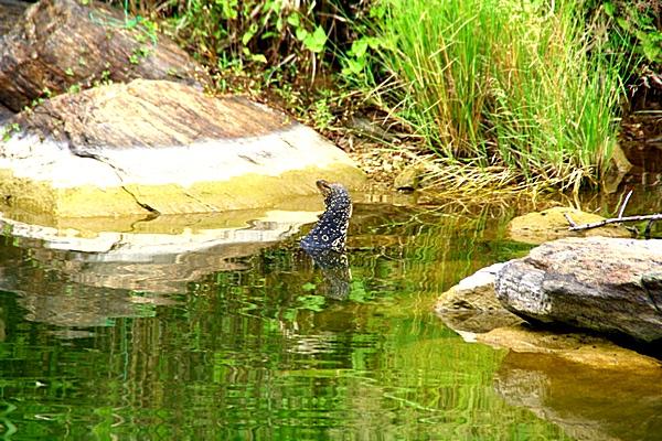 Шри-Ланка. Озеро. Фото: Сима Петрова/Великая Эпоха (The Epoch Times)