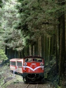 Поезд проходит по лесу с цветущими вишнями. Фото: Sam Yeh/Getty Images