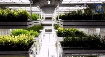 Проект растений для закрытых помещений на Марсе. Фото: Screenshot/NTD Television