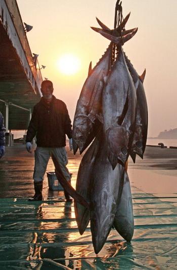 У побережья США обнаружен радиоактивный тунец. Фото: JIJI PRESS/AFP/Getty Images