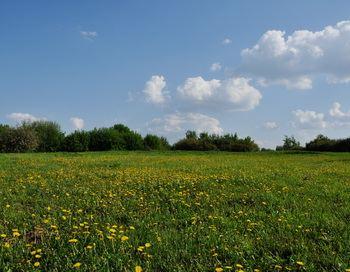 «И золотом украсились поля...». Фото: Екатерина Кравцова /Великая Эпоха