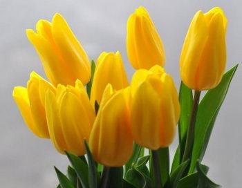 Подарки к 8 марта. Тюльпаны. Фото: Владимир Бородин/Великая Эпоха (The Epoch Times)