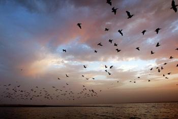 Небольшая певчая птица мигрирует на огромные расстояния. Фото: David McNew/Getty Images