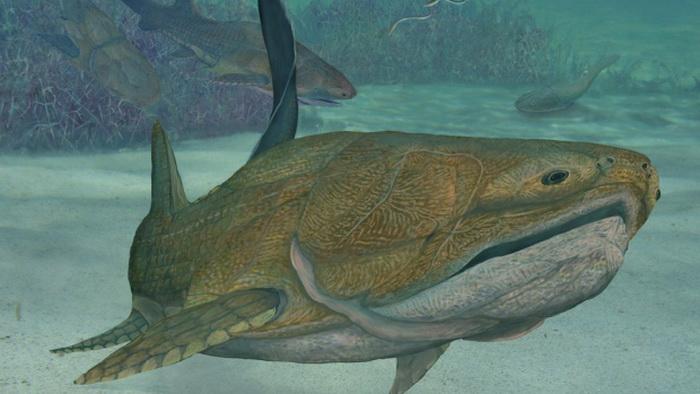 Реконструкция окаменелости рыбы, найденной в Китае, которая жила более 400 миллионов лет назад. Фото: Brian Choo