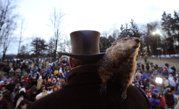 США празднуют  День Сурка. Фото: Getty Images