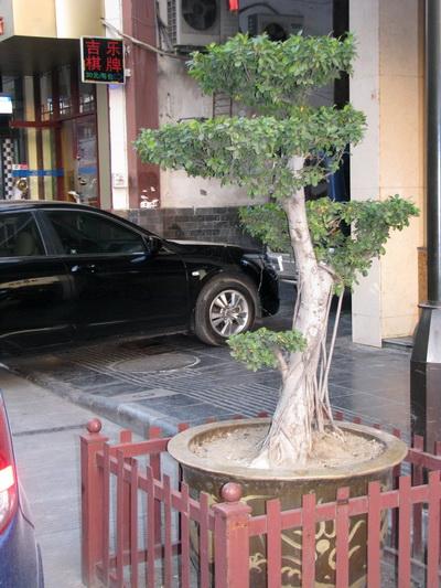 Деревце возле ресторана в Гуйлине. Фото:  Ольга Судникович/Великая Эпоха (The Epoch Times)