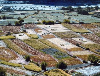 По методу, разработанному Бернхардом Мюллером, в Тибете достигнуты замечательные результаты на экспериментальных полях по выращиванию зерновых, овощей и фруктов на высоте от 2 800 до 4 300 над уровнем моря. Экспериментальные поля на уровне 3000 м над уровнем моря. Фото: Bernhard Mьller