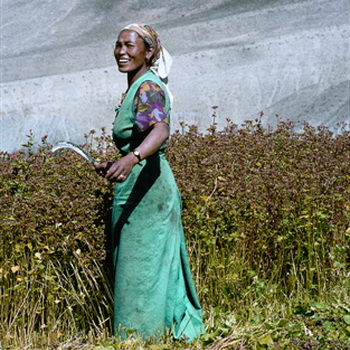 Урожай гречки в Тибете. Фото: Bernhard Mьller