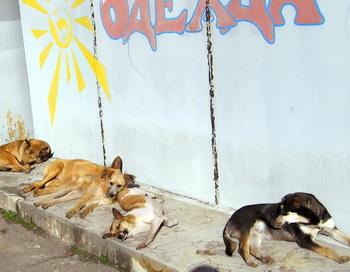 Бездомные собаки. Фото: Ирина Рудская/Великая Эпоха (The Epoch Times)