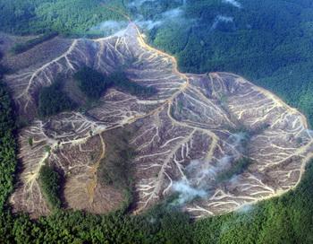 Аэрофотосъёмки, организованные Гринпис, показывают пустые площади в горах провинции Джамби на острове Суматра в Индонезии. Фото Romeo Gacad/AFP/Getty Images