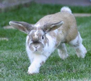 2011 год – год кролика. Фото с сайта crolik.com