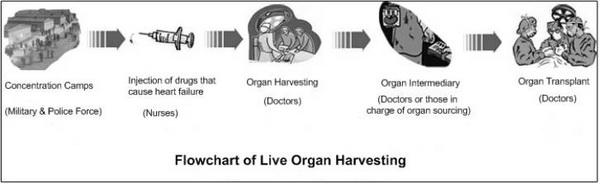 Эта диаграмма составлена на основе информации, переданной Анни – она иллюстрирует процесс извлечения органов у живых последователей Фалуньгун (Слева направо: концентрационные лагеря (военные и вооруженная полиция); инъекция, вызывающая сердечную недостаточность (медсестры); извлечение органов (врачи); посредники в продаже органов (врачи или лица, ответственные за источник органов); трансплантация органов (врачи))
