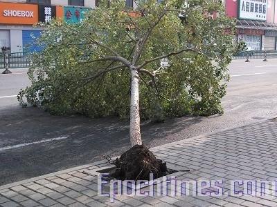 Последствия ливня и сильного ветра. Город Харбин провинции Хэйлунцзян. Июль 2010 год. Фото: The Epoch Times