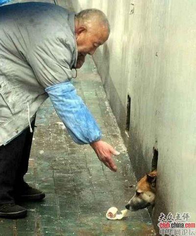 В районе Учан города Уханя собака уже три года живёт в подвале дома и не выходит на улицу, иногда только высовывает наружу морду, чтобы поесть то, что ей приносят местные жители. Три года назад, когда она была щенком, на её глазах убили её мать, с тех пор она боится людей. Фото с aboluowang.com