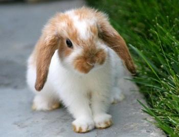 Год кролика глазами китайцев