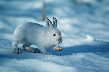 Китайский календарь: 2011 год — год Кролика. Фото: photos.com