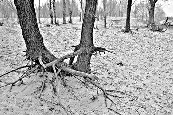 Засуха в провинции Шаньдун может стать самой сильной за 100 лет. Фото с epochtimes.com