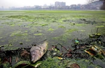 Озеро Кунчао в пригороде города Уханя провинции Хубэй. 18 марта 2009 год. Фото с epochtimes.com