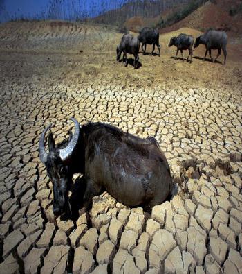 Засуха в Китае охватила около 4 миллионов гектар посевов.На фото уезд Шилинь провинции Юньнань. Фото: AFP/AFP/Getty Images.