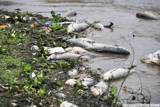 Мор рыбы на реке Ганьцзян. Провинция Цзянси. 13 октября 2010 год. Фото с epochtimes.com