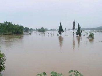 Стихийные бедствия в Китае нанесли большой ущерб сельскому хозяйству страны. Фото с epochtimes.com
