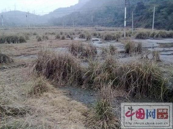 Заболоченные промышленными сливами поля. Посёлок Мэйтянь провинции Хунань. Фото с epochtimes.com